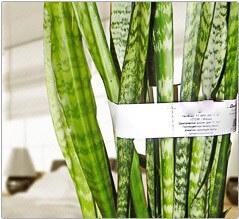 Маркировка растений